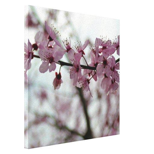 Flor de cerezo de la primavera floral lona envuelta para galerías