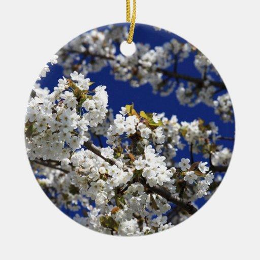 Flor de cerezo ornato