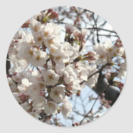 Flor de cerezo del Washington DC Pegatina Redonda