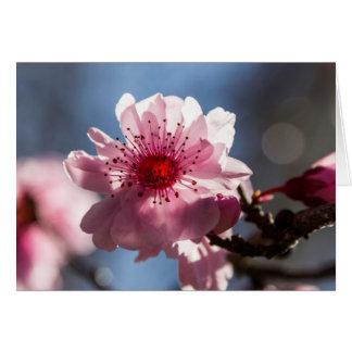 Flor de cerezo en la tarjeta de felicitación del