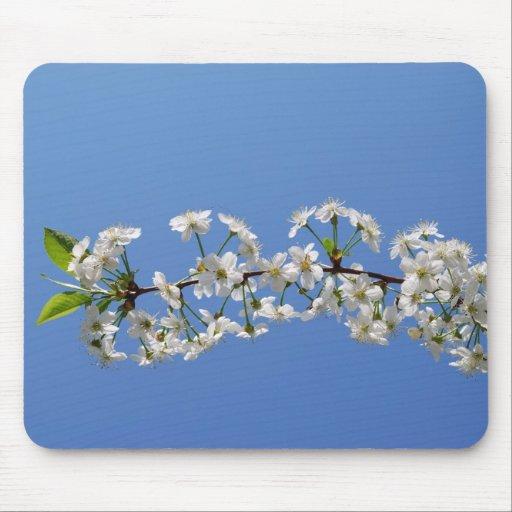 Flor de cerezo en Mousepad azul Alfombrilla De Ratones