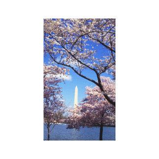 Flor de cerezo en Washington DC Impresión De Lienzo