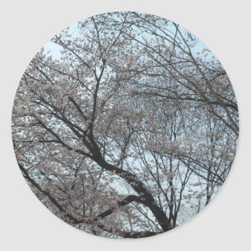 Flor de cerezo floreciente pegatina redonda