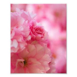 Flor de cerezo impresion fotografica
