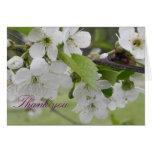 flor de cerezo, gracias tarjeta