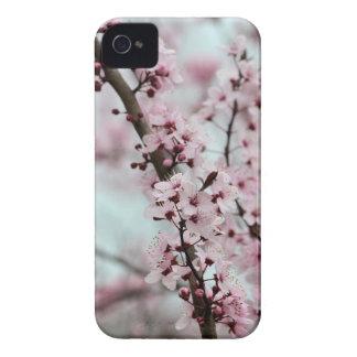Flor de cerezo hermosa de la primavera iPhone 4 cárcasa
