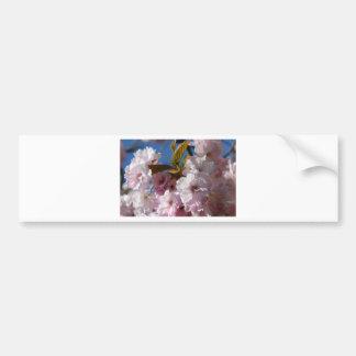 Flor de cerezo hermosa etiqueta de parachoque