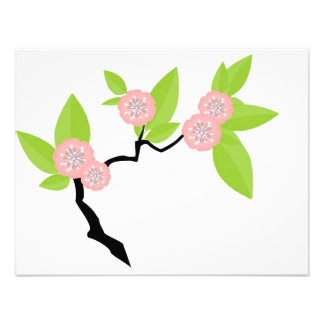 flor de cerezo comunicado