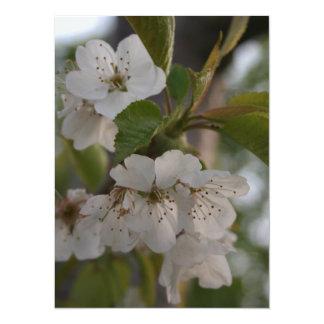Flor de cerezo invitaciones personalizada