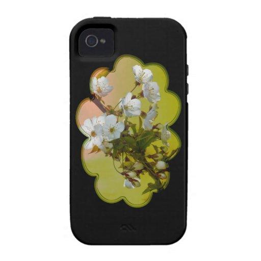 Flor de cerezo iPhone 4/4S carcasas