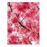 Flor de cerezo japonesa (2013) postal