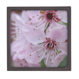 Flor de cerezo japonesa cajas de regalo de calidad