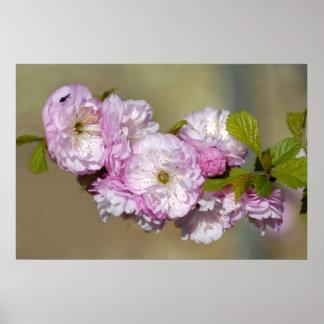 Flor de cerezo japonesa decorativa póster