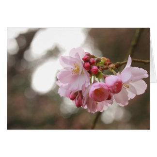flor de cerezo japonesa en la luz tarjeta pequeña