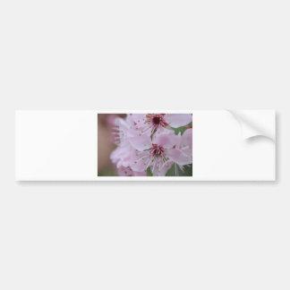 Flor de cerezo japonesa etiqueta de parachoque