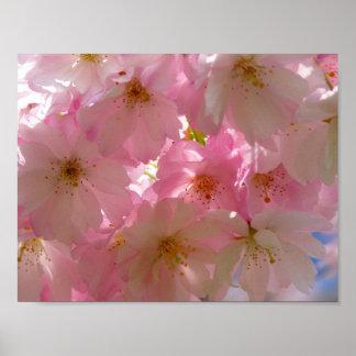 Flor de cerezo japonesa póster