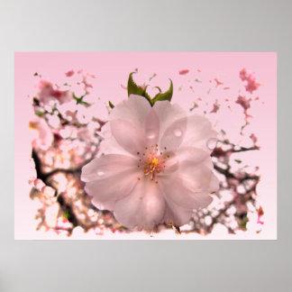 Flor de cerezo póster