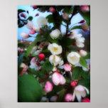 Flor de cerezo posters