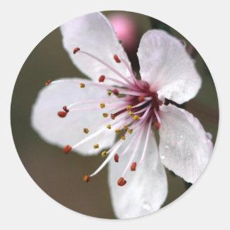 Flor de cerezo rosada delicada pegatinas