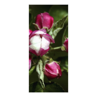 Flor de cerezo rosada - rackcard diseño de tarjeta publicitaria