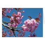 flor de cerezo rosada tarjeta pequeña