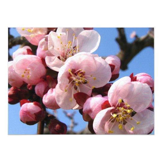"""Flor de cerezo Sakura Invitación 5.5"""" X 7.5"""""""