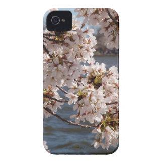 Flor de cerezo sobre el Potomac (caja de iPod iPhone 4 Case-Mate Coberturas