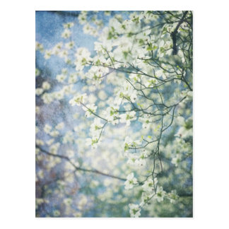 Flor de cerezo tarjetas postales