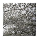 Flor de cerezo teja