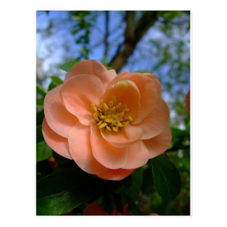 Flor de color salmón del Rubus Postal
