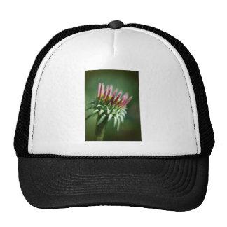 Flor de Coneflower del Echinacea de la abertura Gorra