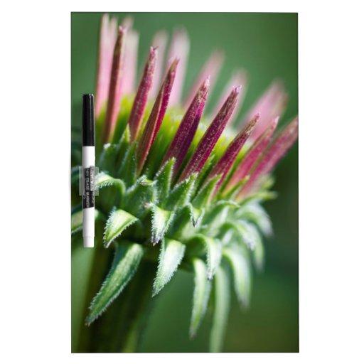 Flor de Coneflower del Echinacea de la abertura Pizarras