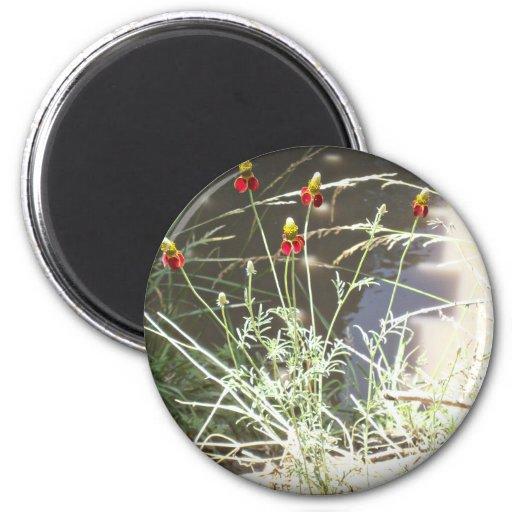 Flor de Coneflower del gorra mexicano en las monta Imán De Frigorifico