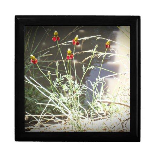 Flor de Coneflower del gorra mexicano en las monta Joyero Cuadrado Grande