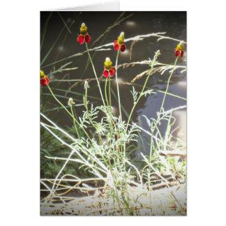 Flor de Coneflower del gorra mexicano en las monta Felicitaciones