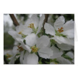 Flor de Crabapple Felicitaciones
