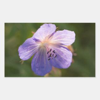 Flor de Cranesbill del prado Pegatina Rectangular