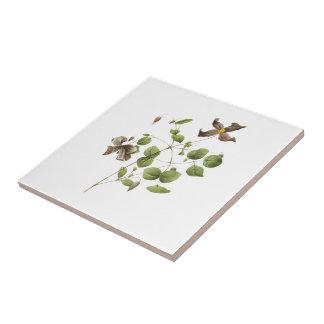 Flor de cuero italiana (Clematis) por Redouté Tejas Cerámicas