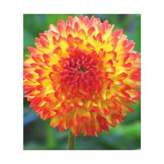 Flor de Dalia del amarillo anaranjado Impresiones De Lienzo