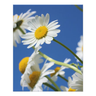 Flor de Dasy Tarjeton