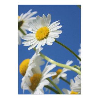 Flor de Dasy Invitacion Personalizada