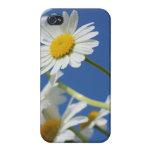 Flor de Dasy iPhone 4 Protectores