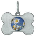 Flor de Dasy Placas Mascota