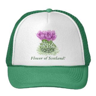 Flor de Escocia, cardo Gorra