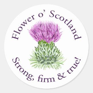 Flor de Escocia. ¡Fuerte, firme y verdad! Pegatina Redonda