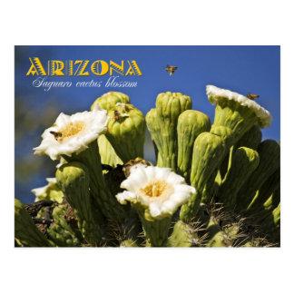 Flor de estado de Arizona: Flor del cactus del Postales