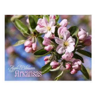 Flor de estado de Arkansas: Apple florece Postal