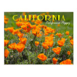 Flor de estado de California: Amapola de Tarjetas Postales