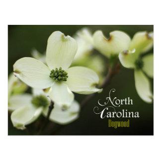 Flor de estado de Carolina del Norte: Dogwood Tarjeta Postal