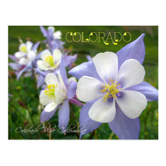 Flor de estado de Colorado: Montaña rocosa Tarjeta Postal